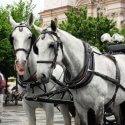 Escursione con Cavalli Cosa fare a Praga